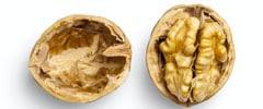 Walnut halves in the shell