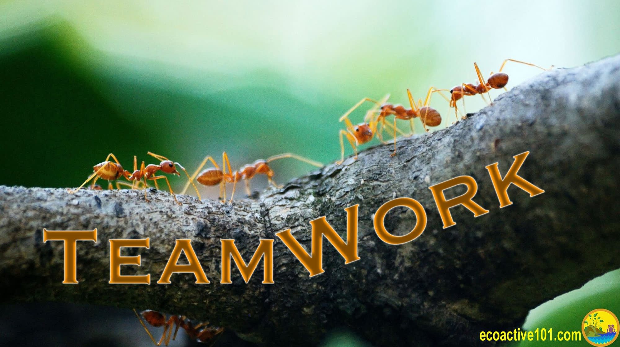 "A tree branch with ants at work, and the word ""Teamwork"""