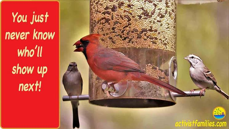"A bright red cardinal perches on side of a bird feeder holding a seed in his mouth, with a sparrow sitting on either side of him. The text, set against a bright red background, reads, ""You just never know who'll show up next!"""